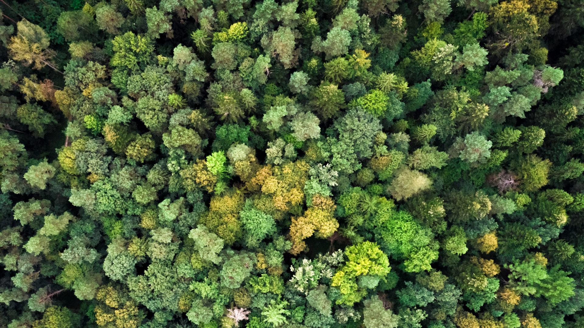Centre d'Etude Technique Environnemental et Forestier (CETEF)
